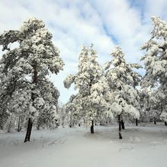Мороз снежком укутал