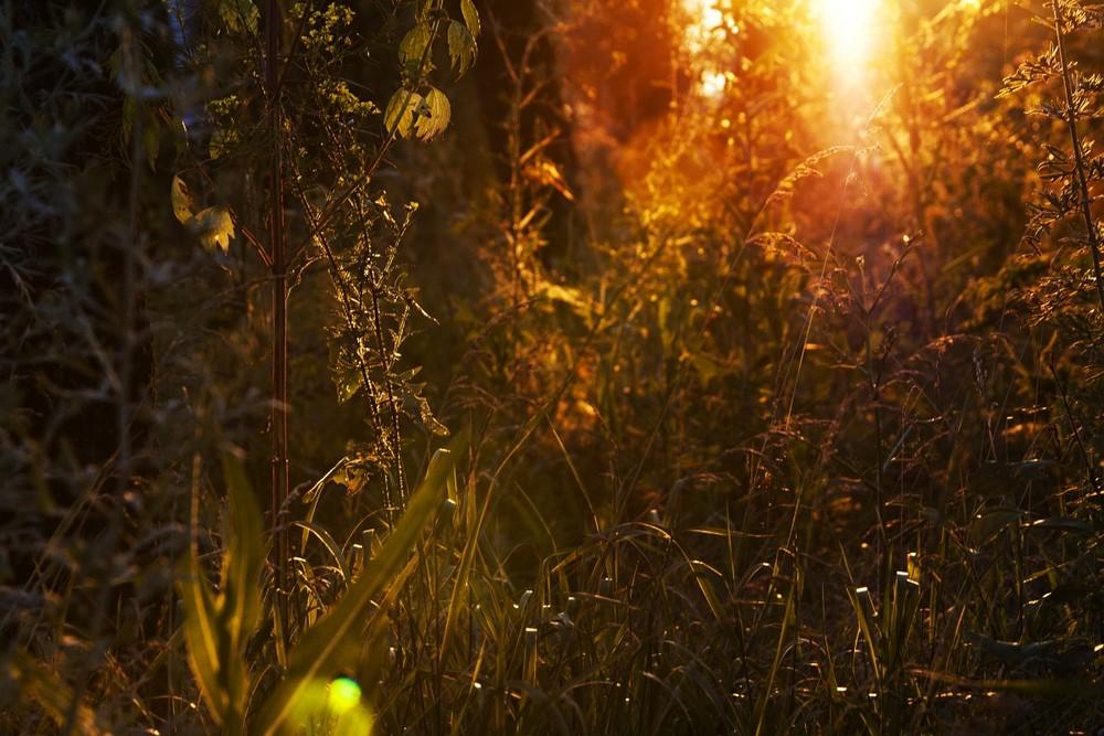 Приложения для обработки фото расплывчатые огни это