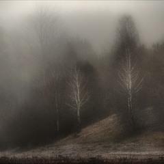 берёзовый туман