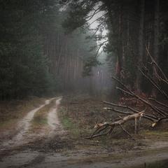 ранок у лісі