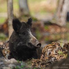 Свинство-Материнство:))