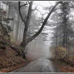 туман и дорога