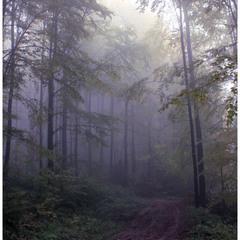 Блукаючи лісовими стежками
