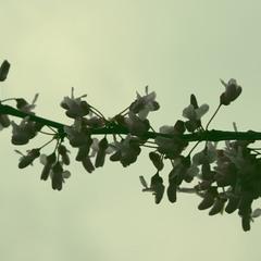 Весна-распускаются цветы...!