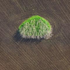 Зеленая сторона силы