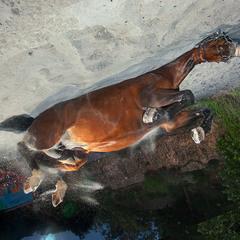 Лошади летают вдохновенно...
