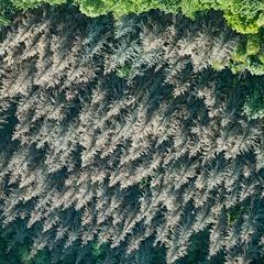 Мозаика седого леса