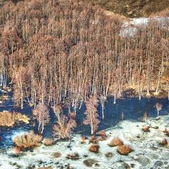 Спустились деревья к весенней воде