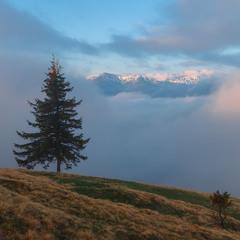 Чорногора у тумані