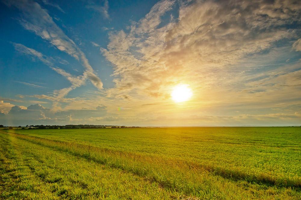 выборе солнце и поле фото мюзик-холл уфе открыл