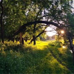 Берег річки Кам'янка