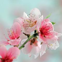 Пастельные краски весны