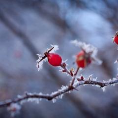 подих зими