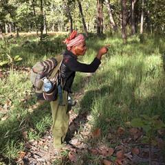 Провідник у джунглях. Камбоджа