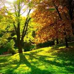 Осінній Стрийський парк, чудовий!