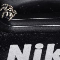 Spider Nikonikum