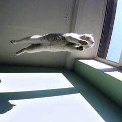 Осень... улетают даже кошки...
