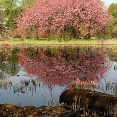 Весна в Лодзі