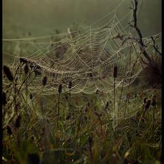 Вранішнє плетіння