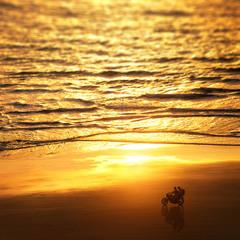 Вкус свободы (Индия, Paradise beach)