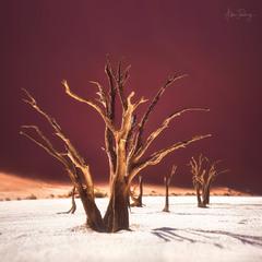 Deadvlei / Мертвая Долина