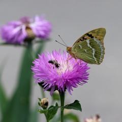 Этюд с бабочкой...