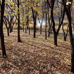 Осінній парк над Бугом...(2)