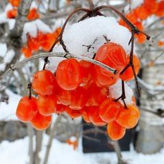 Ще трішечки про зиму...