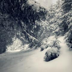 у лісі лісі темному