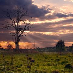 Evening dead tree