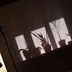 Солнечное утро фотографа.