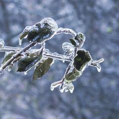 Быстрая заморозка