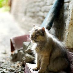 Вот такой печальный кот...