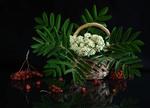 Горобиновий з цвітом та плодами