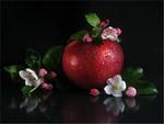 Заквітчане яблучко