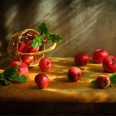А яблучка розсипались серпневі, їх сонце крізь фіранку споглядало...