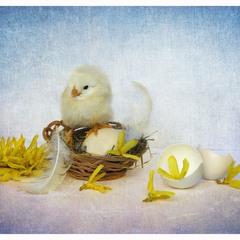 Це моє гніздо і я тут господар!))