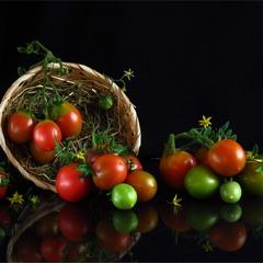 Помідорний урожай