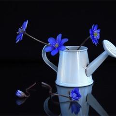 Про сині квіточки