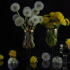 Dandelion Vine