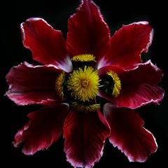 Petals&Flowers