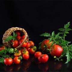 Розсипались помідорки