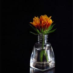 Про квіточку простеньку...