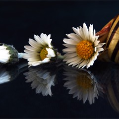 Хронологія цвітіння