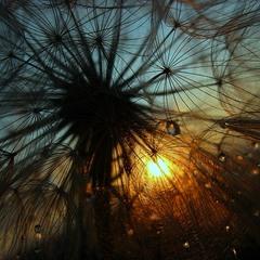 Сонячна павутинка