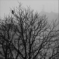 Городское одиночество