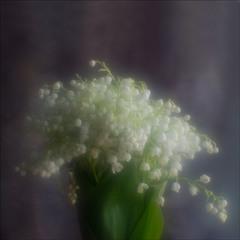 Весны цветы