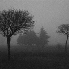 Парковый туман
