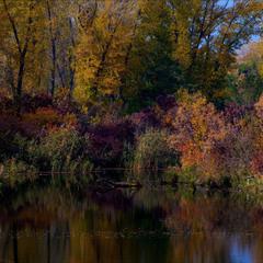 Осень. Сказочный чертог, Всем открытый для обзора. Просеки лесных дорог, Заглядевшихся в озера.