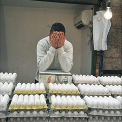 Яйцеторговец